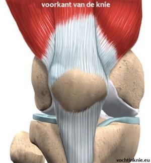 vocht-in-knie-anatomie